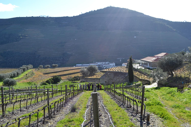 Winery Visit