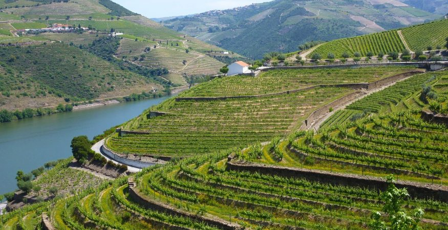Douro Valley Landscape