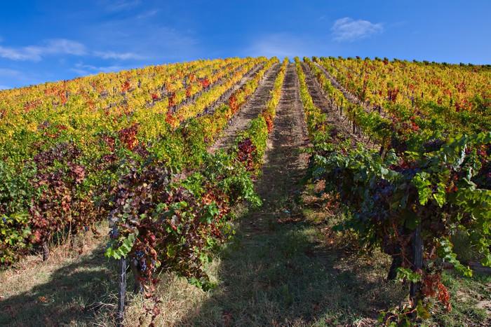 Port Wine vineyards in Douro