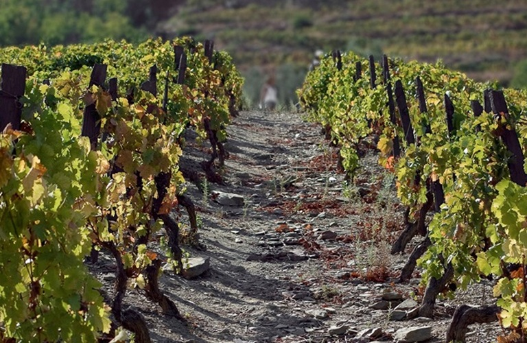 geology-and-soil-douro