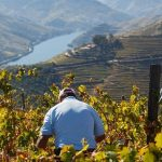 Workers of the Douro Valley